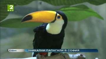 Уникални папагали в София