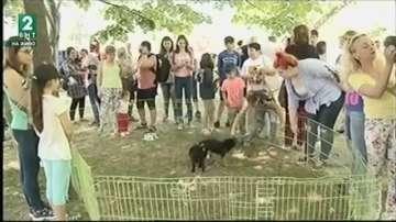 Над 500 кучета в приюта в Русе чакат своите осиновители