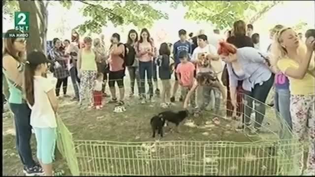 Над 500 кучета от приюта в Русе чакат своите осиновители.