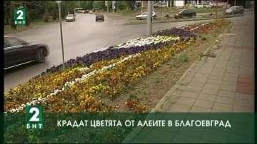 Цветята от алеите в Благоевград  се крадат