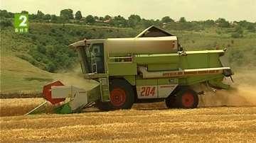 Ожънаха една трета от пшеницата в Русенско