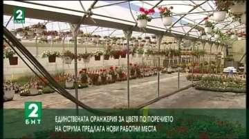 Единствената оранжерия за цветя по поречието на Струма предлага работни места