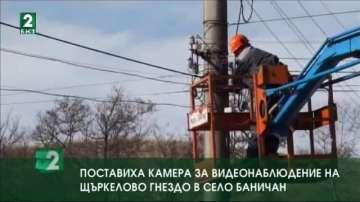 Поставиха камера за видеонаблюдение на щъркелово гнездо в село Баничан