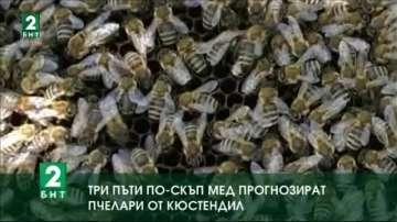 Tри пъти по-скъп мед прогнозират пчелари в Кюстендилско