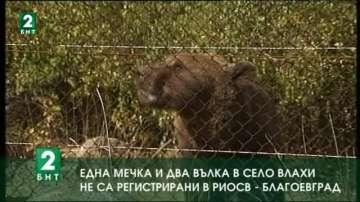 Една мечка и два вълка в село Влахи не са регистрирани в РИОСВ - Благоевград