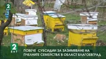 Повече субсидии за зазимяване на пчелните семейства в област Благоевград