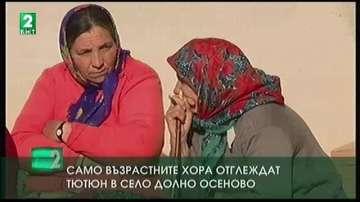 Само възрастните хора отглеждат тютюн в село Долно Осеново