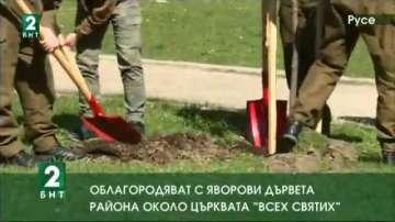 """Облагородяват с яворови дървета района около църквата """"Всех Святих"""""""