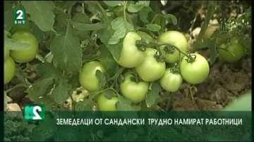 Земеделци от Сандански трудно намират работници