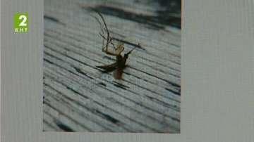 Пръскат превантивно срещу комари в Бургас
