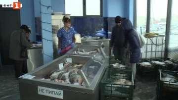Търговците в Русе спекулират с продажбата на дунавски шаран