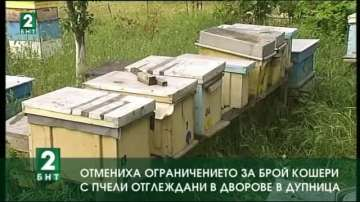 Отмениха ограничението за брой кошери с пчели отглеждани в дворове в Дупница