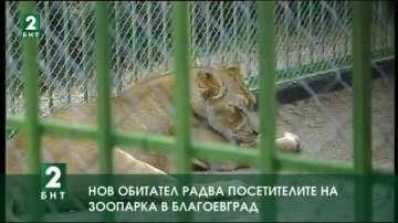 Нов обитател радва посетителите на зоопарка в Благоевград