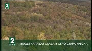 Вълци нападат домашни животни в село Стара Кресна