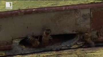 Пчелари от Варненско обмислят протест срещу употребата на опасни пестициди