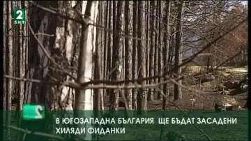 В Югозападна България ще бъдат засадени хиляди фиданки