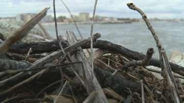 Лошото време изхвърли тонове дървесина по плажовете в Италия