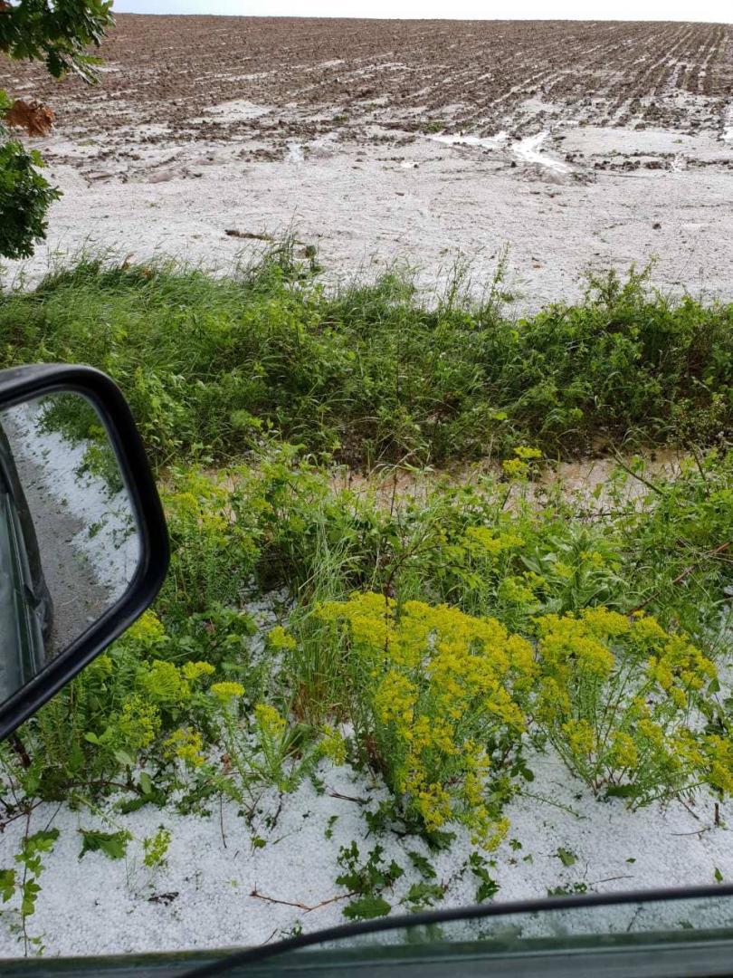 снимка 5 Градушка унищожи насаждения в района на Угърчин