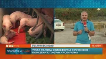 Чумата по свинете обхвана нови ферми в Русенско
