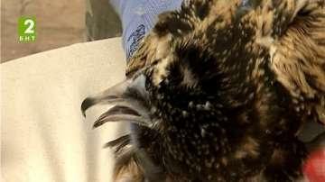 Пуснаха на свобода три египетски лешояда