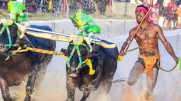 Сравняват индийски състезател в надбягвания с биволи с Юсейн Болт