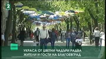 Украса от цветни чадъри радва жители и гости в Благоевград