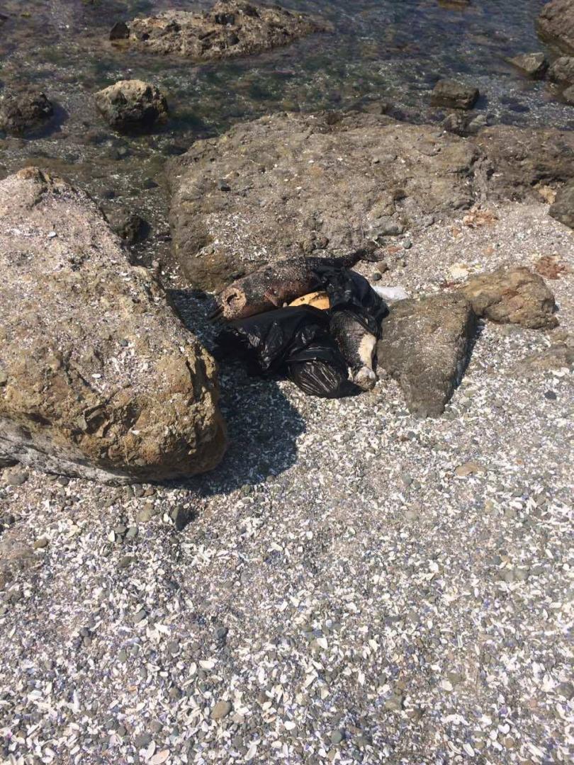 мъртви делфини плажа мечата дупка лозенец