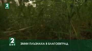 Змии плъзнаха в Благоевград