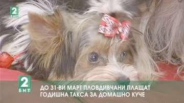 До 31-ви март пловдивчани плащат годишна такса за домашно куче