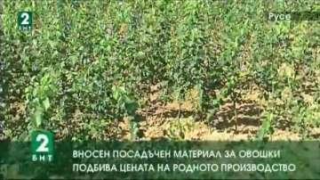 Вносен посадъчен материал за овошки подбива цената на родното производство
