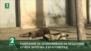 Кампания за осиновяване на бездомни кучета започва в Благоевград
