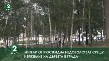 Жители на Кюстендил недоволстват срещу изрязване на дървета в града