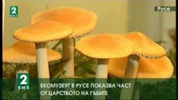 Екомузеят в Русе показва част от царството на гъбите