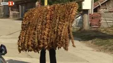 Тютюнопроизводители протестираха срещу обложени с данък субсидии