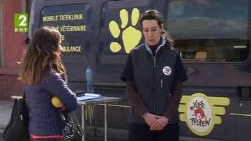 Безплатно кастриране на кучета и котки във Велико Търново