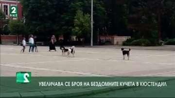 Увеличава се броят на бездомните кучета  в Кюстендил
