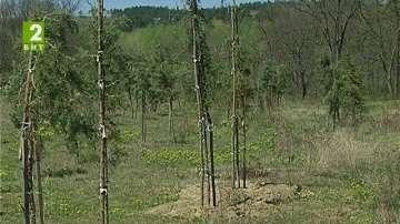 Засаждат дръвчета в училища и детски градини в Пловдив