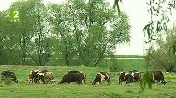 Пръскат срещу нодуларен дерматит в Хасковско