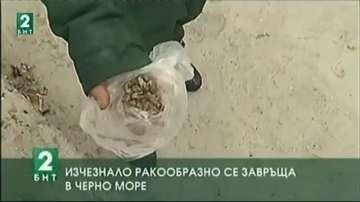 Изчезналият Астакос се завръща  в Черно море