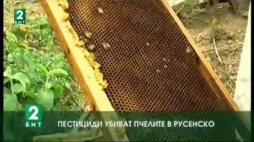 Пестициди убиват пчелите в Русенско