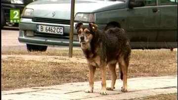 Нов проект за бездомните кучета във Варна