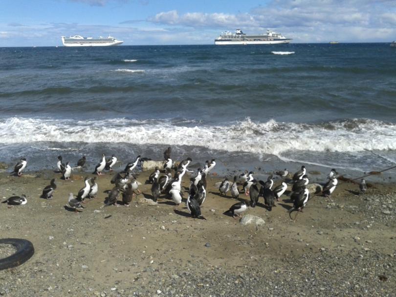 снимка 3 Антарктически дневник: Пунта Аренас