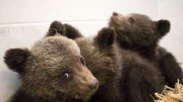Трите изоставени мечета са в парка за танцуващи мечки в Белица