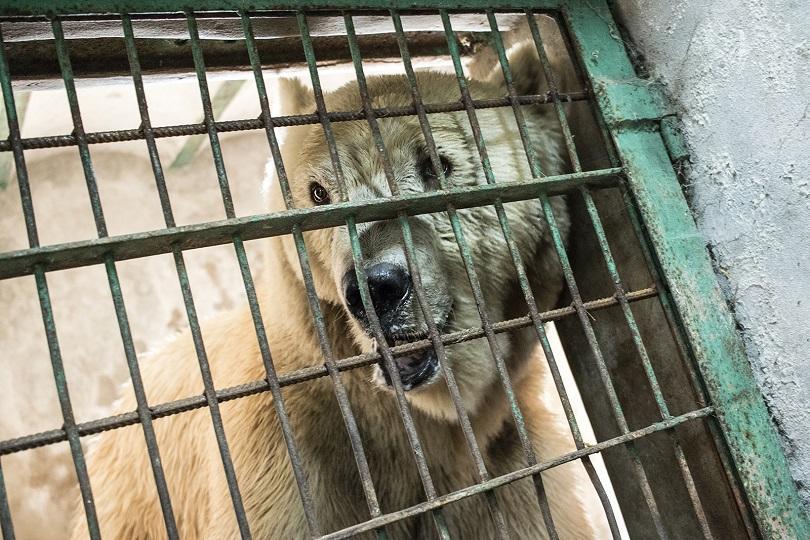 """Екип на международната организация за защита на животните """"Четири лапи"""","""