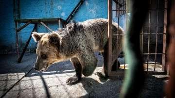 Екип на Четири лапи евакуира животни от незаконен зоопарк в Албания