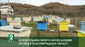И тази година много ниски добиви на мед в Благоевградска област