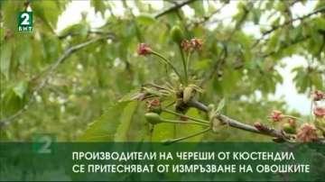 Производители на череши от Кюстендил се притесняват от измръзване на овошките