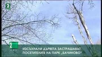 """Изсъхнали дървета застрашават посетителите на парк """"Бачиново"""""""