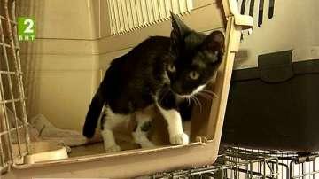 В Русе расте броят на бездомните котки