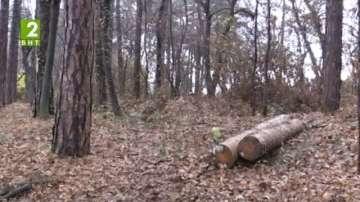 Сериозни глоби за незаконна сеч в Кюстендилско